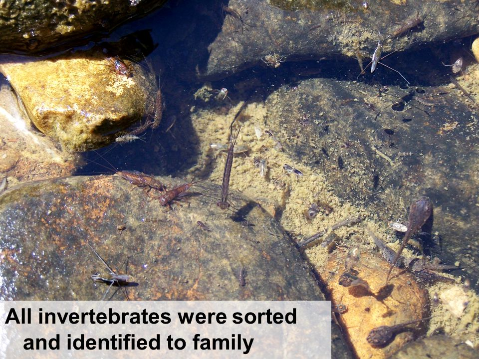 All invertebrates were sorted and identified to family