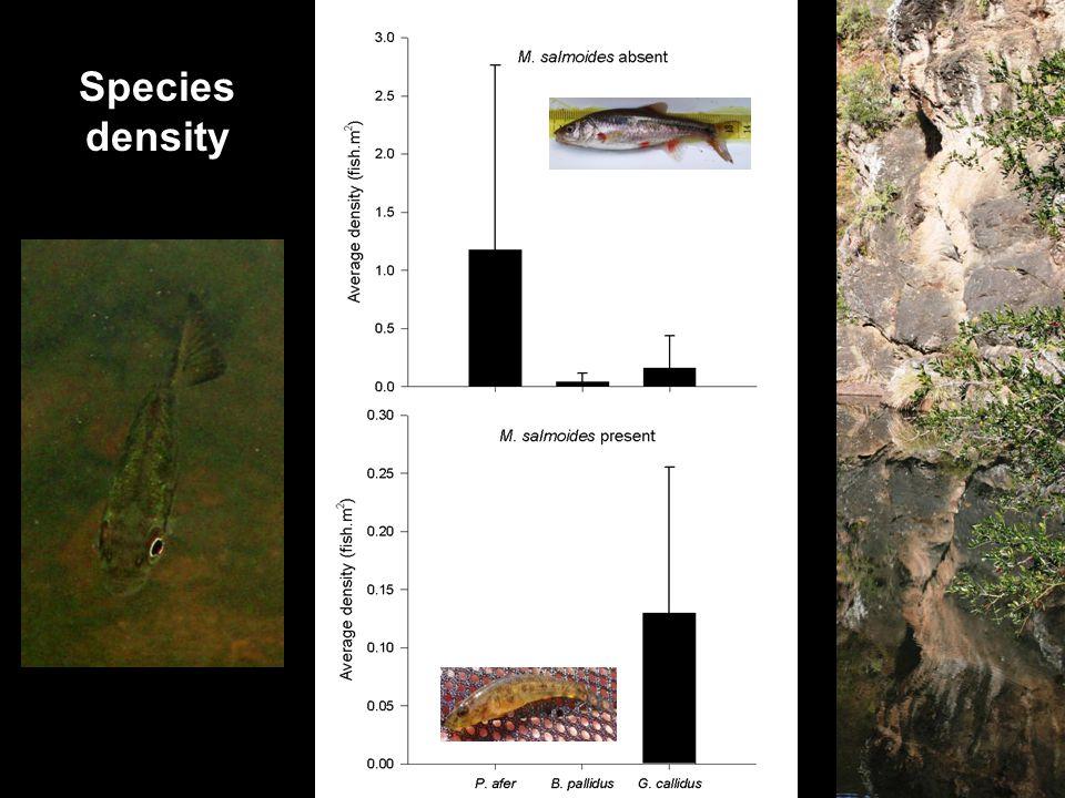 Species density