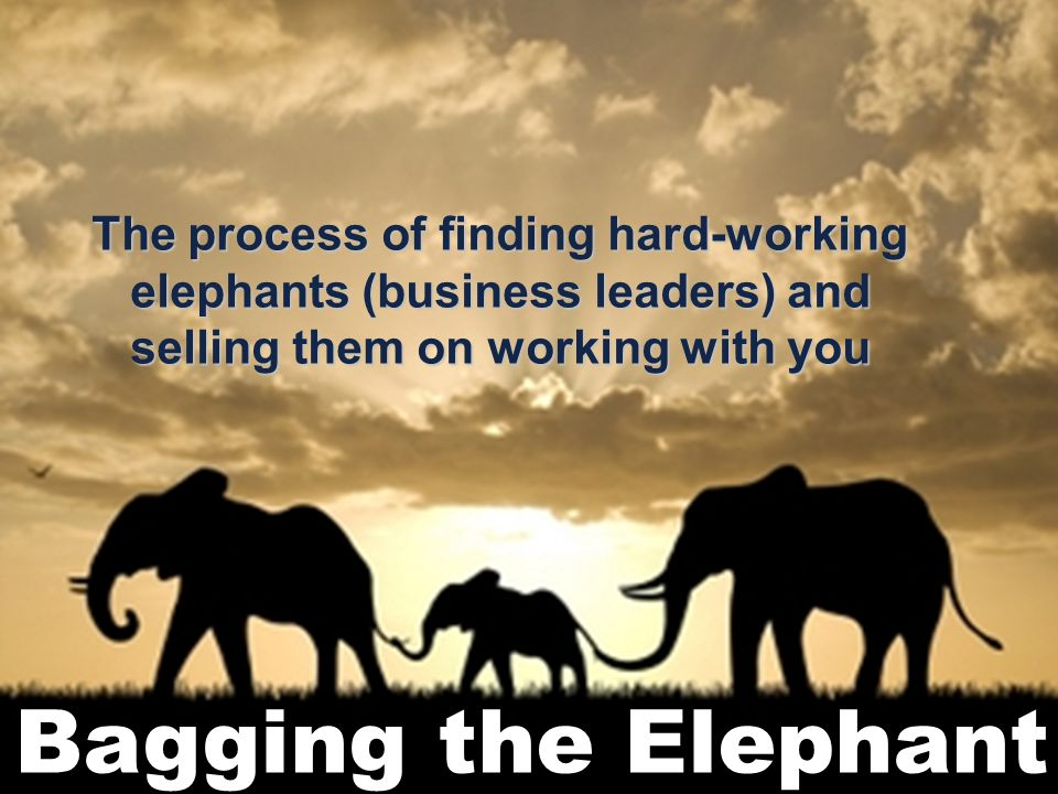 2 The process of finding hard-working elephants (business leaders) and selling them on working with you
