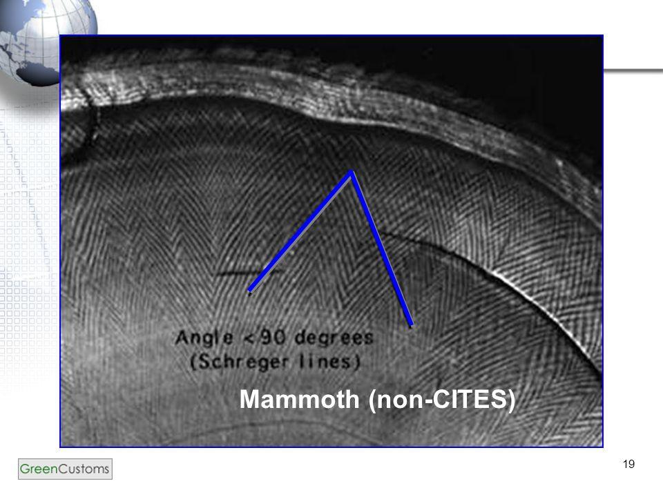 19 Mammoth (non-CITES)