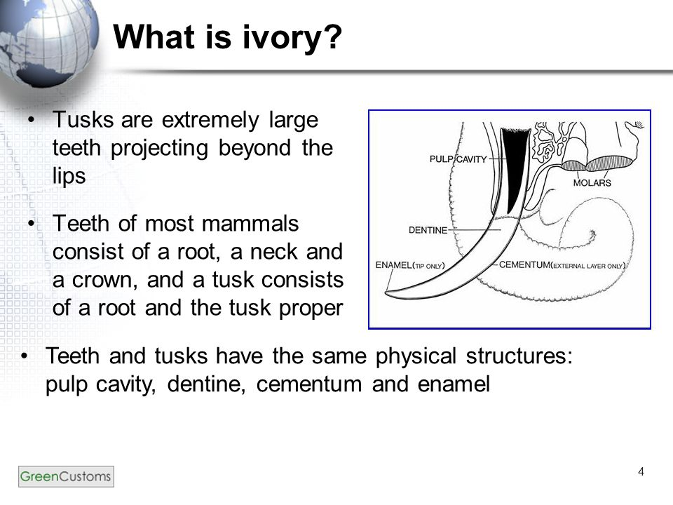 4 What is ivory.
