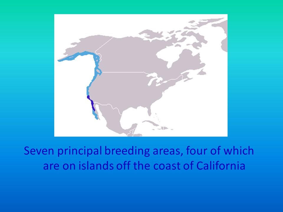 Seven principal breeding areas, four of which are on islands off the coast of California