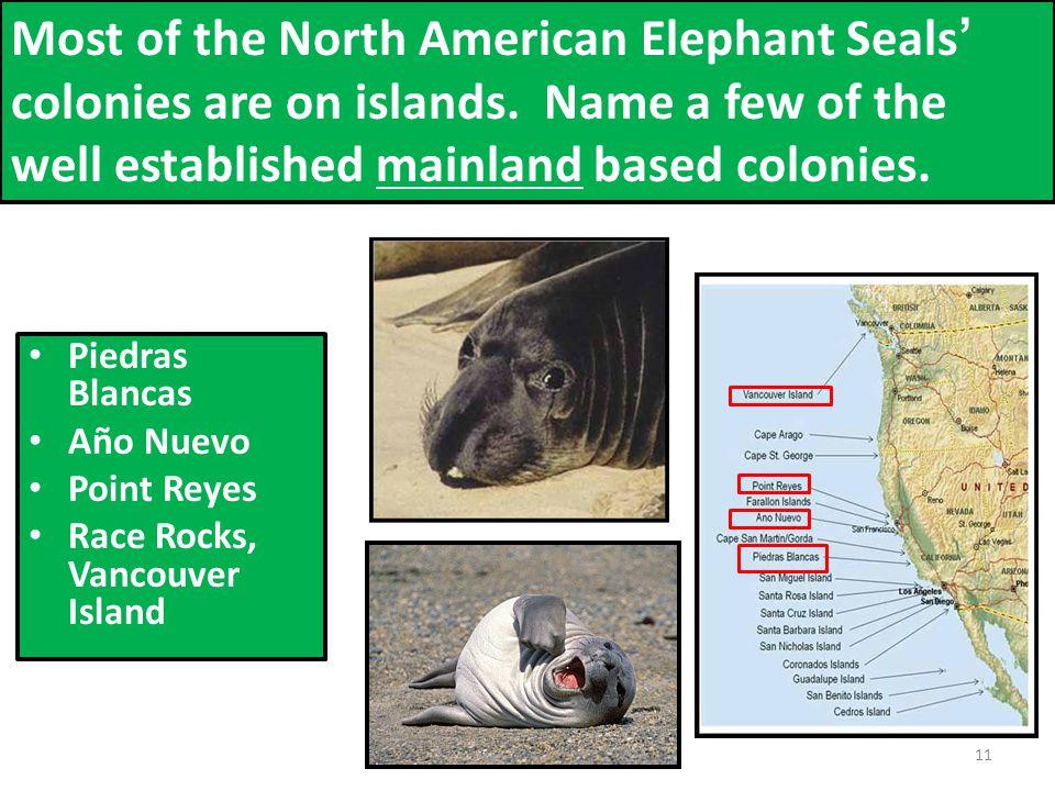 Piedras Blancas Año Nuevo Point Reyes Race Rocks, Vancouver Island Most of the North American Elephant Seals' colonies are on islands.