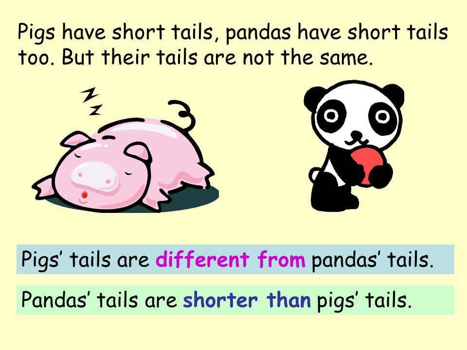 Pigs have short tails, pandas have short tails too.