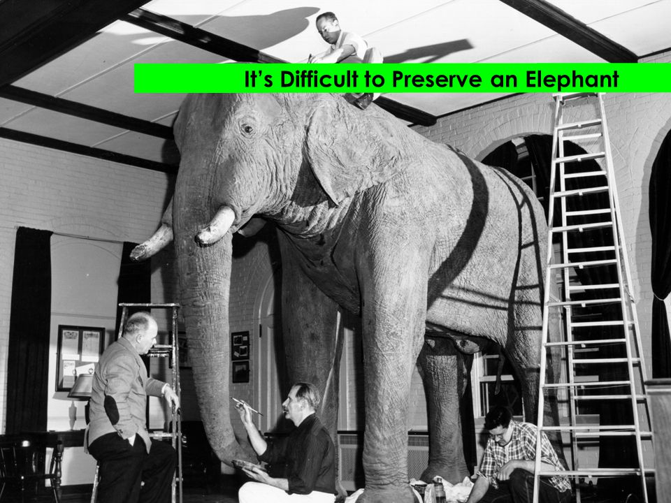 It's Difficult to Preserve an Elephant