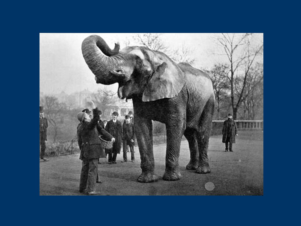 Manage Accession Maintain Disseminate Preserve Institutional Repositories New England Archivist Eliot Wilczek Tufts University March 11, 2006 Describing the Elephant Establish Repository Institutional Needs