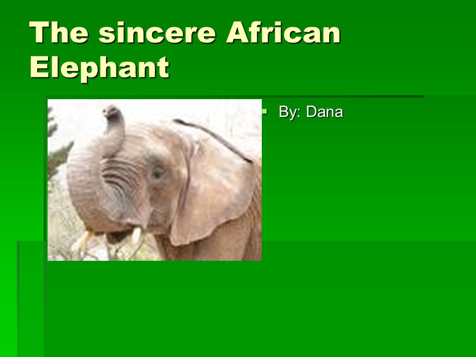 The sincere African Elephant  By: Dana