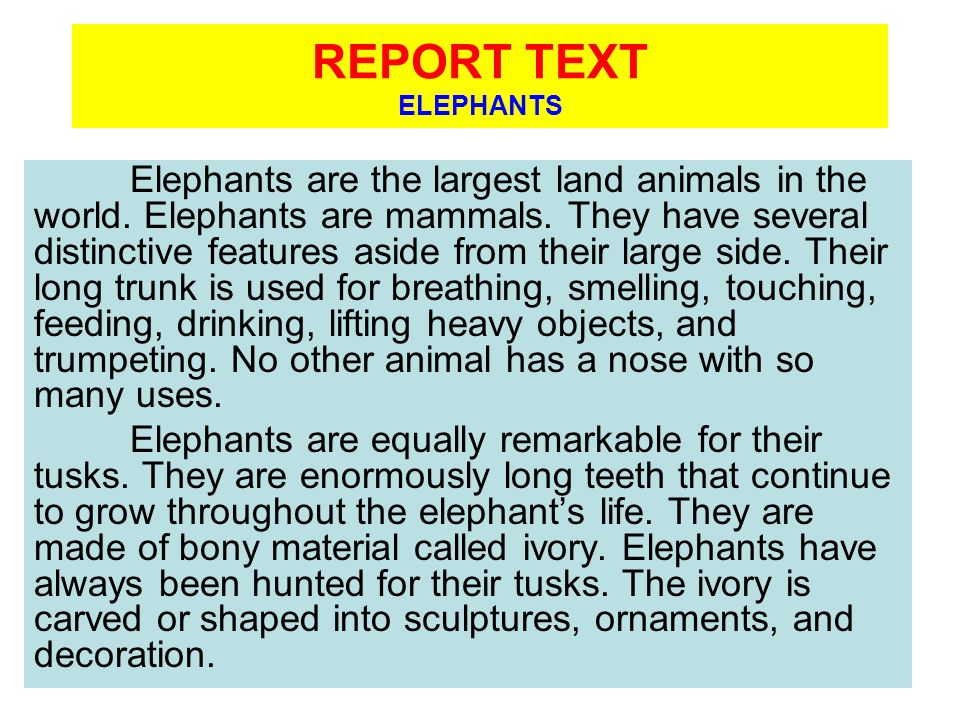 REPORT TEXT ELEPHANTS Elephants are the largest land animals in the world.