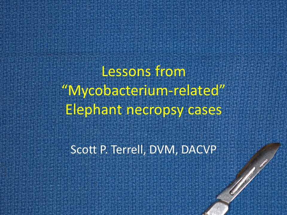 "Lessons from ""Mycobacterium-related"" Elephant necropsy cases Scott P. Terrell, DVM, DACVP"