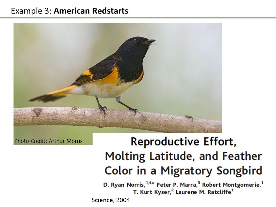 Example 3: American Redstarts Science, 2004 Photo Credit: Arthur Morris