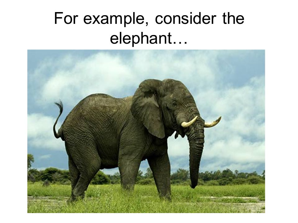 For example, consider the elephant…