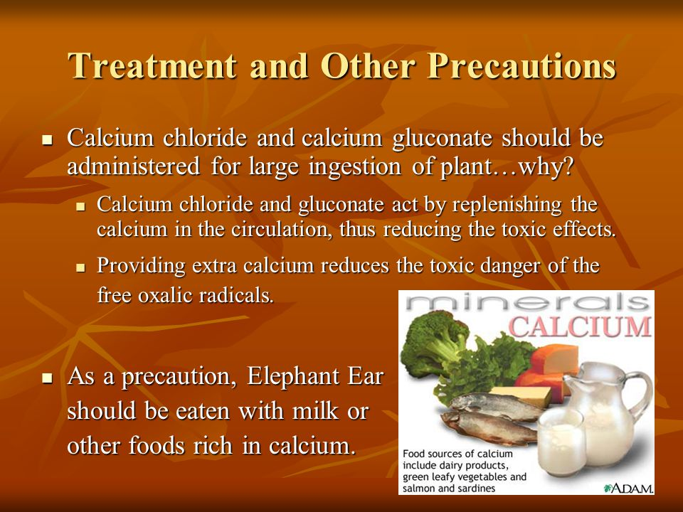 Treatment and Other Precautions Calcium chloride and calcium gluconate should be administered for large ingestion of plant…why? Calcium chloride and c