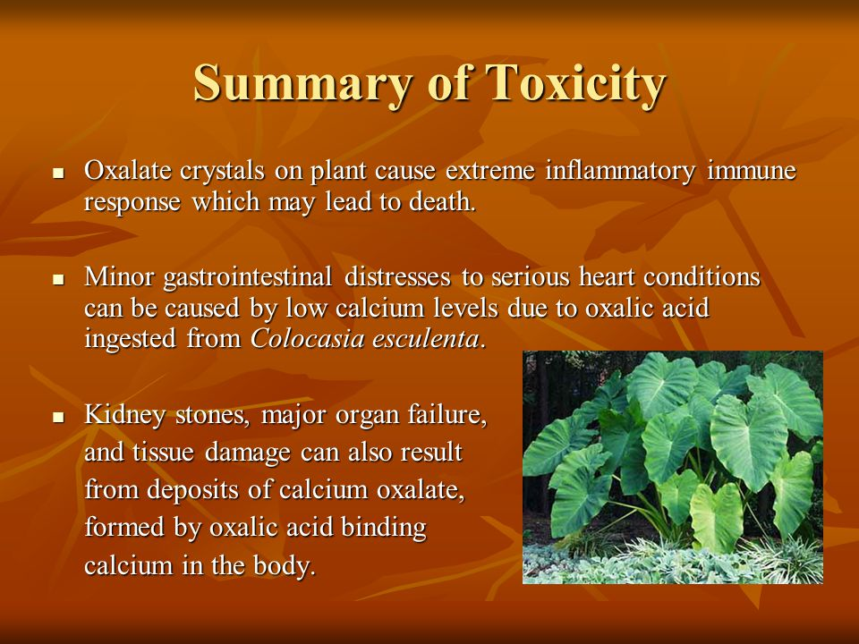 Summary of Toxicity Oxalate crystals on plant cause extreme inflammatory immune response which may lead to death. Oxalate crystals on plant cause extr