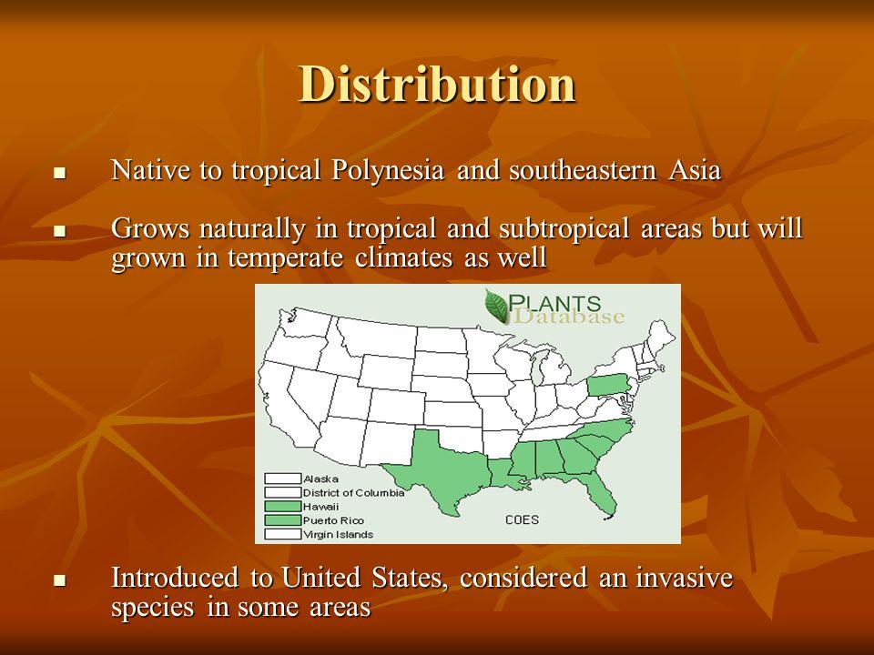 Distribution Native to tropical Polynesia and southeastern Asia Native to tropical Polynesia and southeastern Asia Grows naturally in tropical and sub