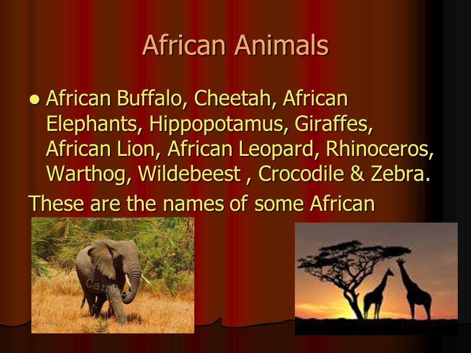 African Animals African Buffalo, Cheetah, African Elephants, Hippopotamus, Giraffes, African Lion, African Leopard, Rhinoceros, Warthog, Wildebeest, Crocodile & Zebra.