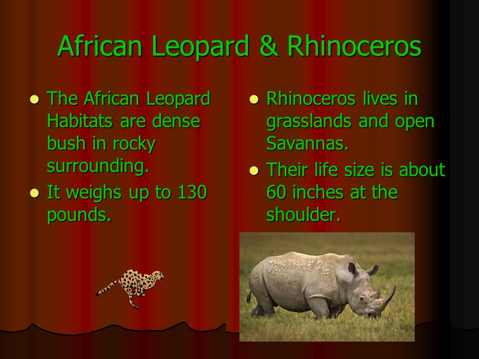 African Leopard & Rhinoceros The African Leopard Habitats are dense bush in rocky surrounding.