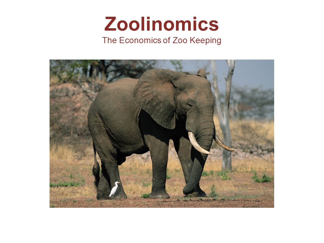 Discussion Question: Did every animal make it into your zoo.