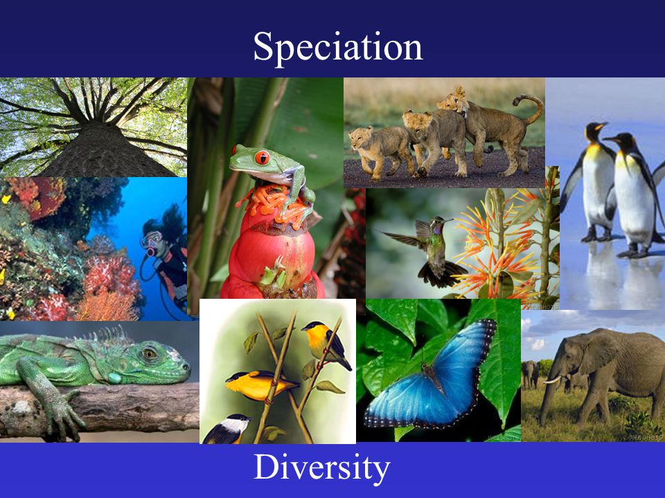 Proposed species concepts There are three different species concepts currently in use.