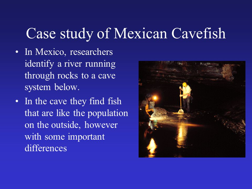 Case study of Mexican Cavefish In Mexico, researchers identify a river running through rocks to a cave system below. In the cave they find fish that a