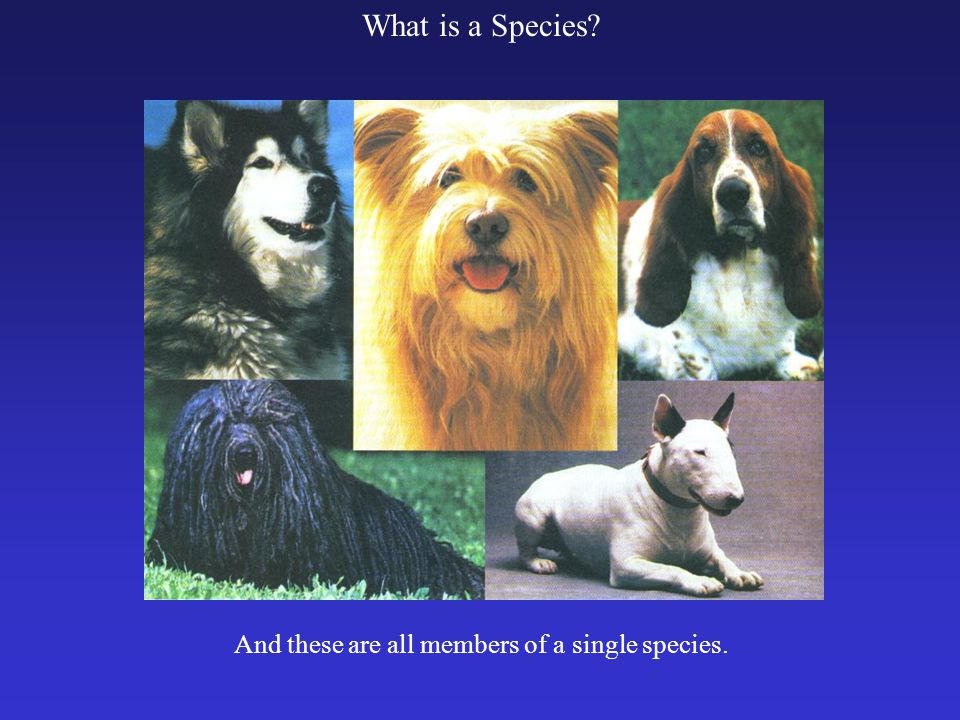 What is a Species? And these are all members of a single species.