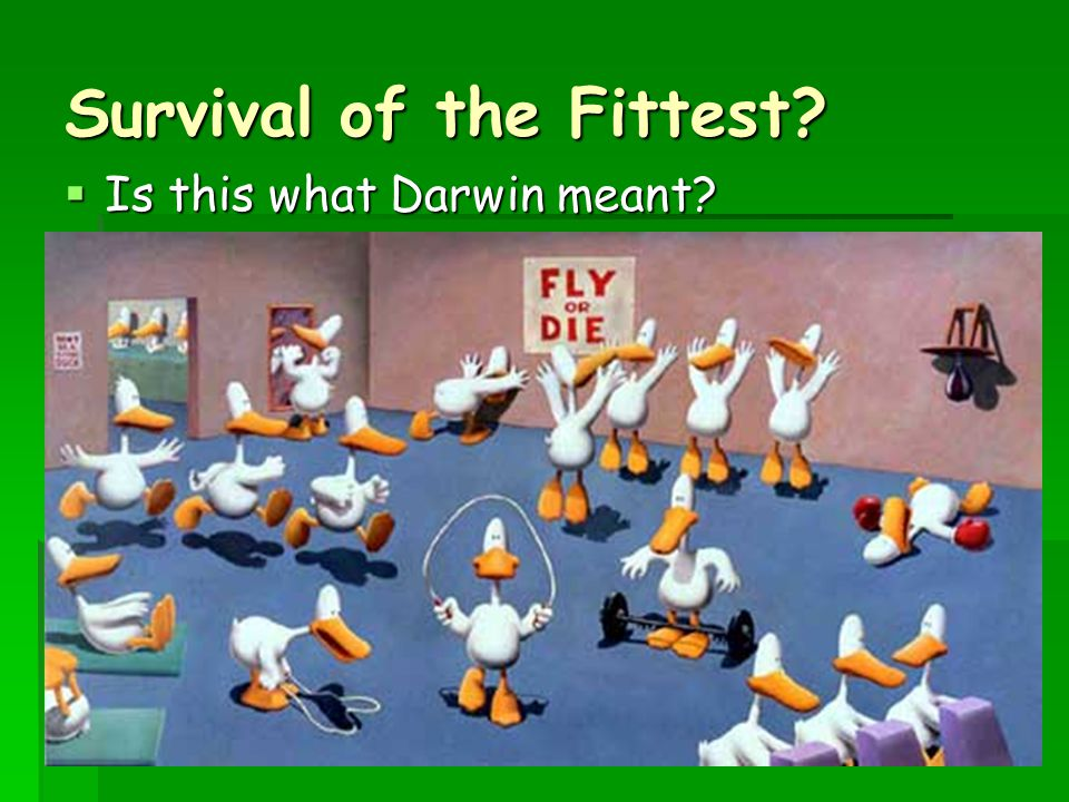 Survival of the Fittest?  Is this what Darwin meant?