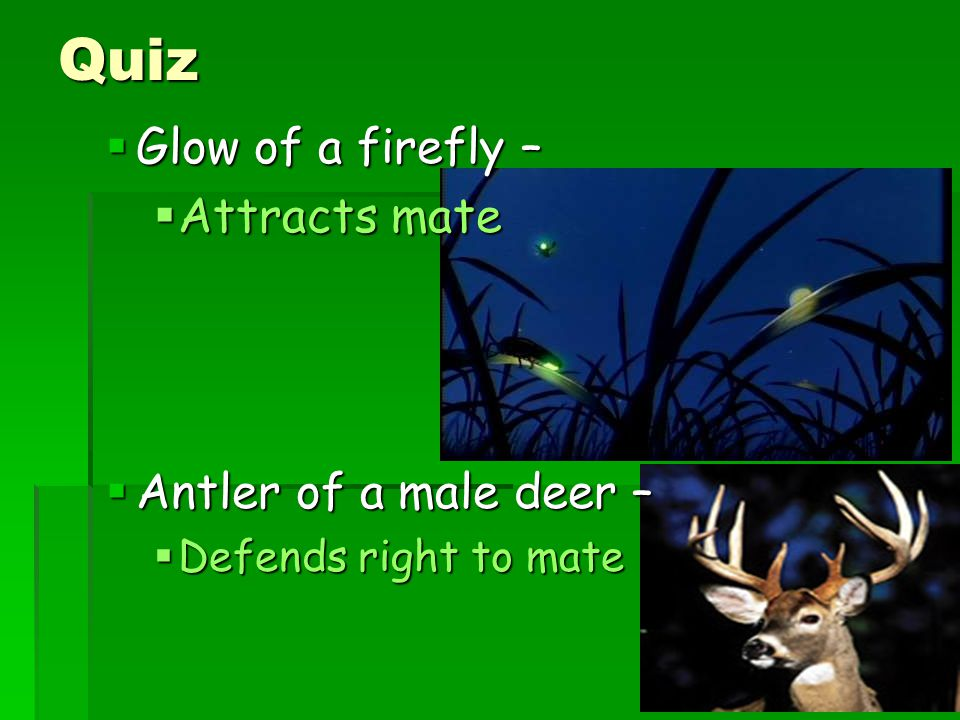 Quiz  Glow of a firefly –  Attracts mate  Antler of a male deer –  Defends right to mate