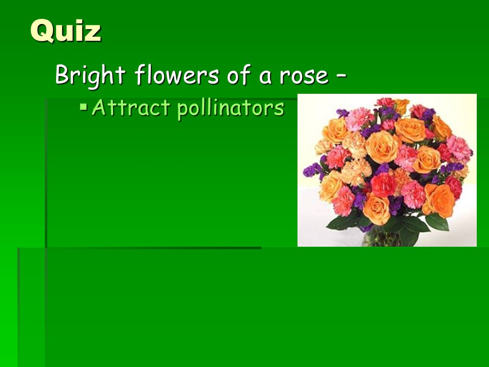 Quiz Bright flowers of a rose –  Attract pollinators