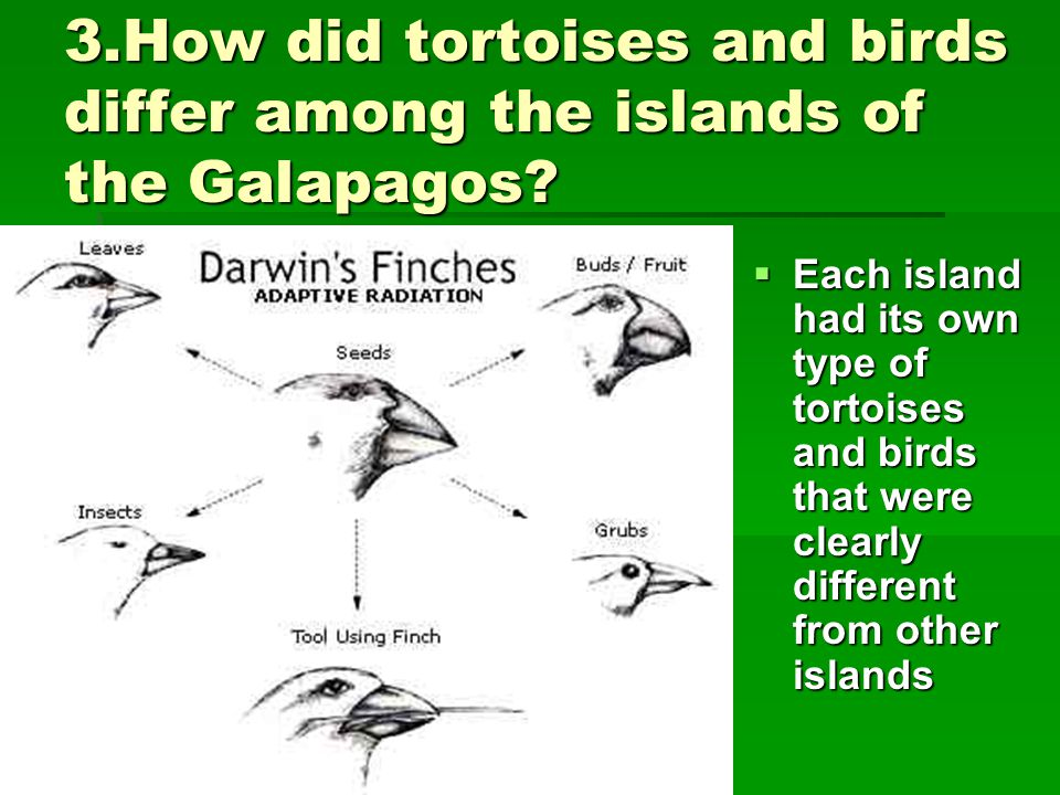 3.How did tortoises and birds differ among the islands of the Galapagos?  Each island had its own type of tortoises and birds that were clearly diffe