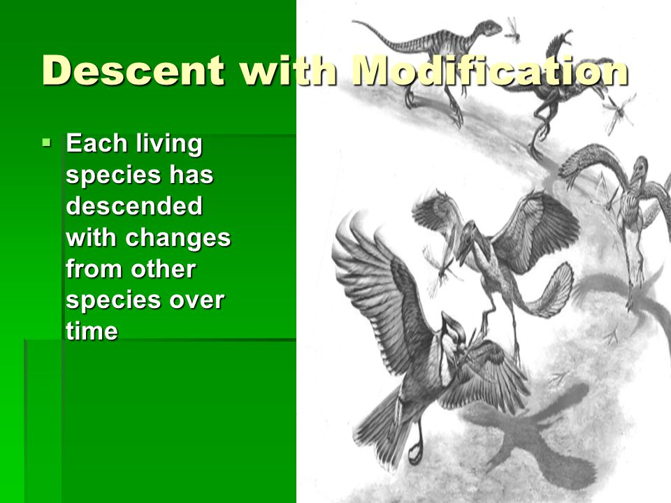 Descent with Modification  Each living species has descended with changes from other species over time