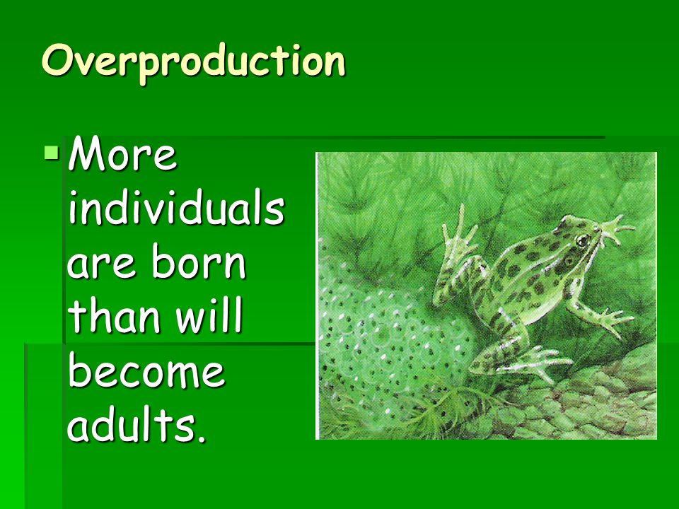 Overproduction  More individuals are born than will become adults.