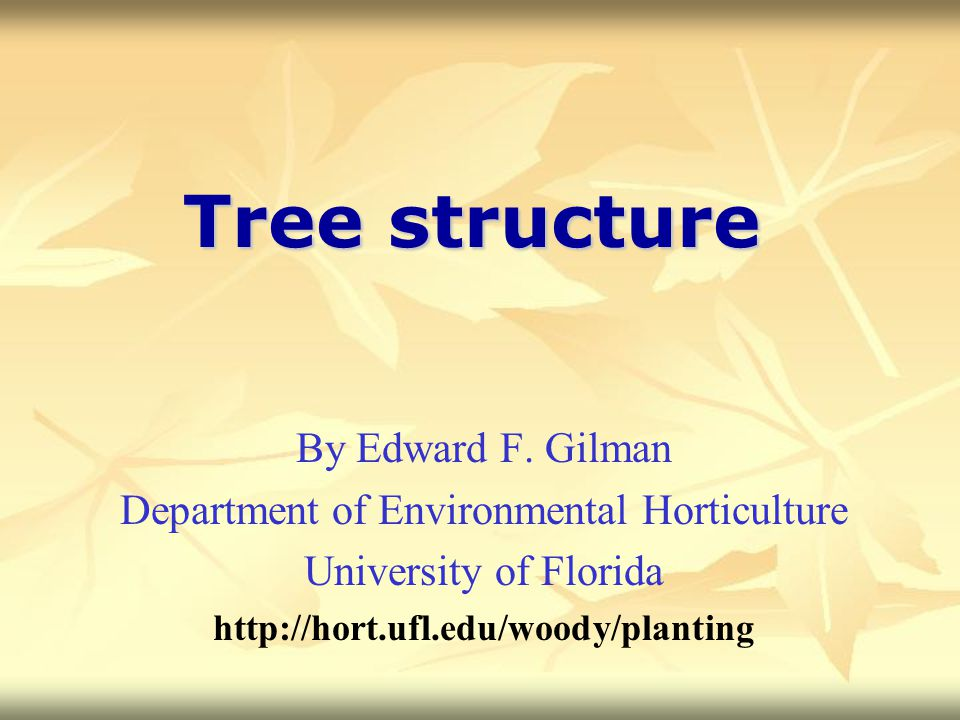 Tree structure By Edward F. Gilman Department of Environmental Horticulture University of Florida http://hort.ufl.edu/woody/planting