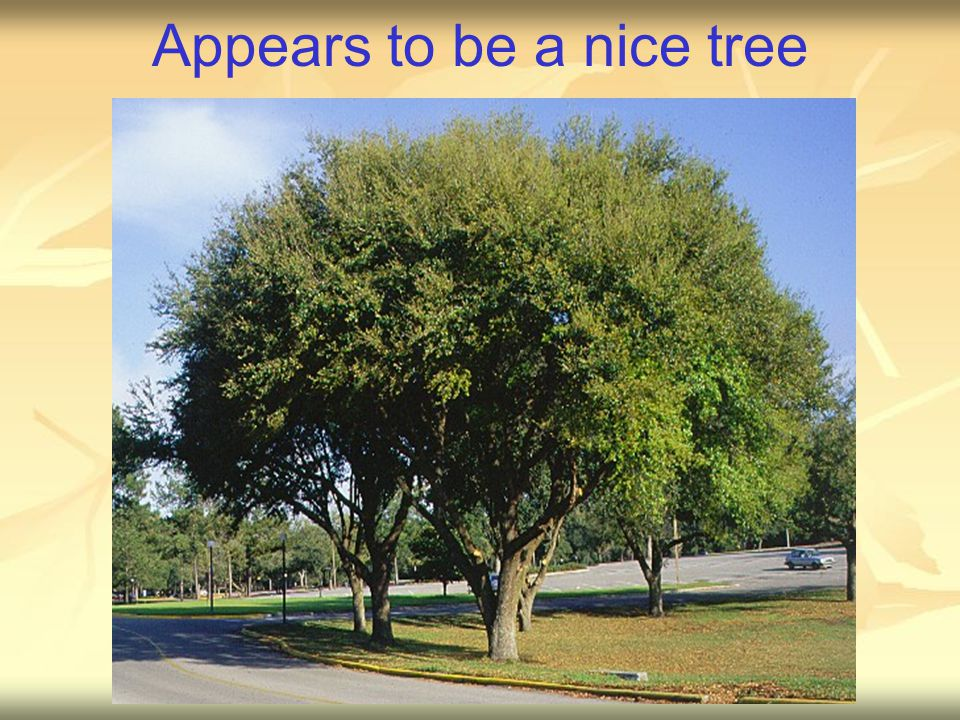 Appears to be a nice tree