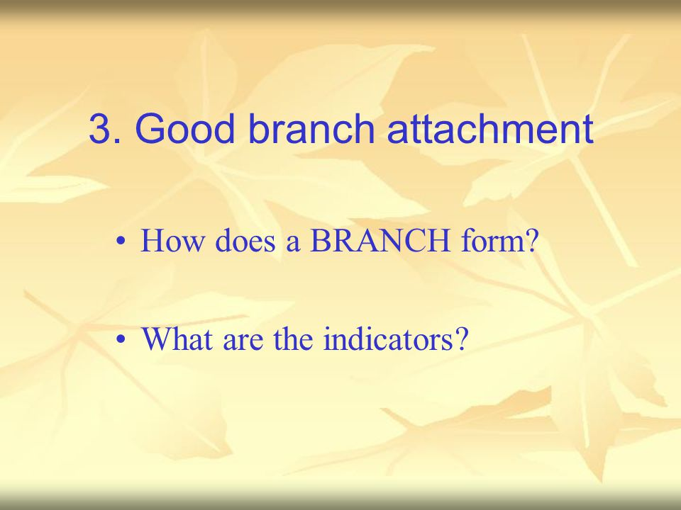 3. Good branch attachment How does a BRANCH form? What are the indicators?