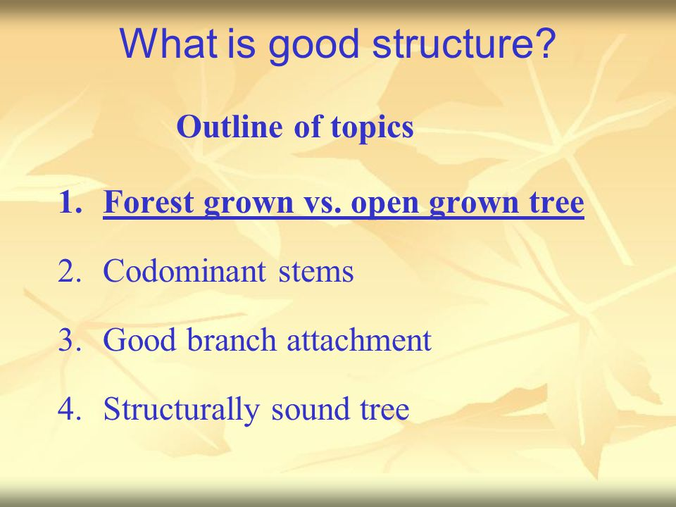 What is good structure? 1.Forest grown vs. open grown tree 2.Codominant stems 3.Good branch attachment 4.Structurally sound tree Outline of topics