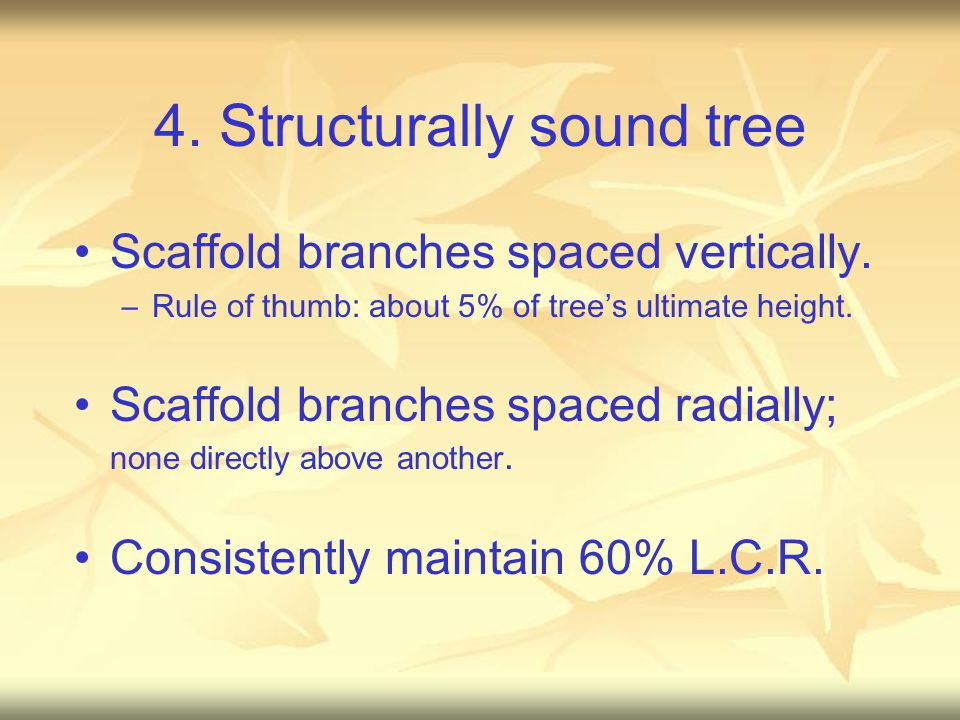 4. Structurally sound tree Scaffold branches spaced vertically. –Rule of thumb: about 5% of tree's ultimate height. Scaffold branches spaced radially;