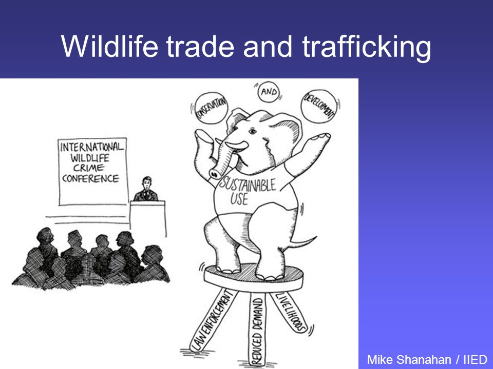 Wildlife trade and trafficking Mike Shanahan / IIED