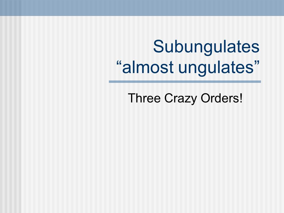 "Subungulates ""almost ungulates"" Three Crazy Orders!"
