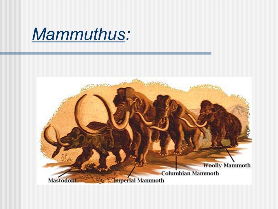 Mammuthus: