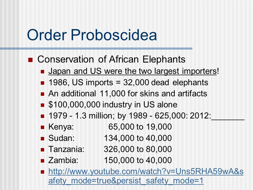Order Proboscidea Conservation of African Elephants Japan and US were the two largest importers! 1986, US imports = 32,000 dead elephants An additiona
