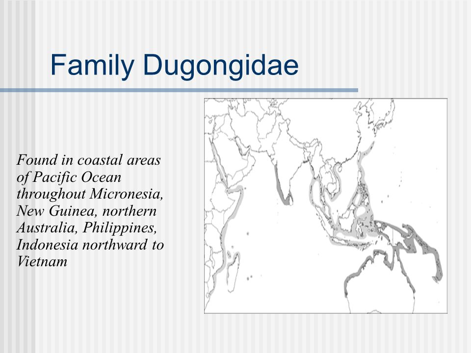 Family Dugongidae Found in coastal areas of Pacific Ocean throughout Micronesia, New Guinea, northern Australia, Philippines, Indonesia northward to V
