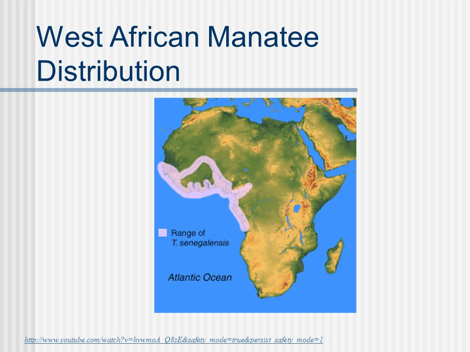 West African Manatee Distribution http://www.youtube.com/watch?v=hvwmoA_Q8zE&safety_mode=true&persist_safety_mode=1