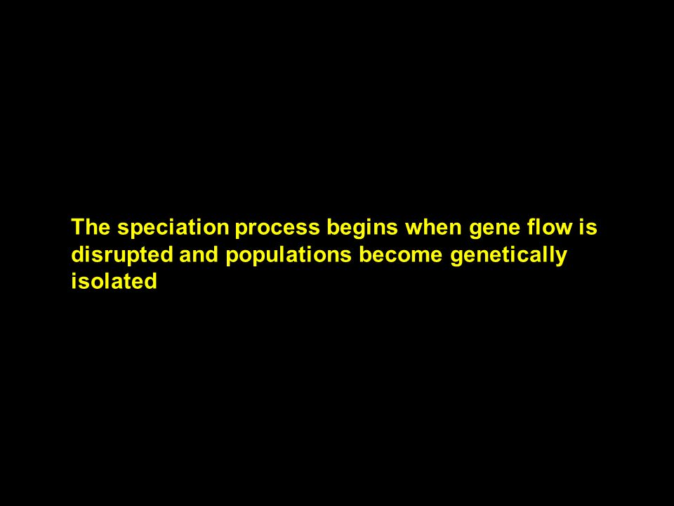 The speciation process begins when gene flow is disrupted and populations become genetically isolated