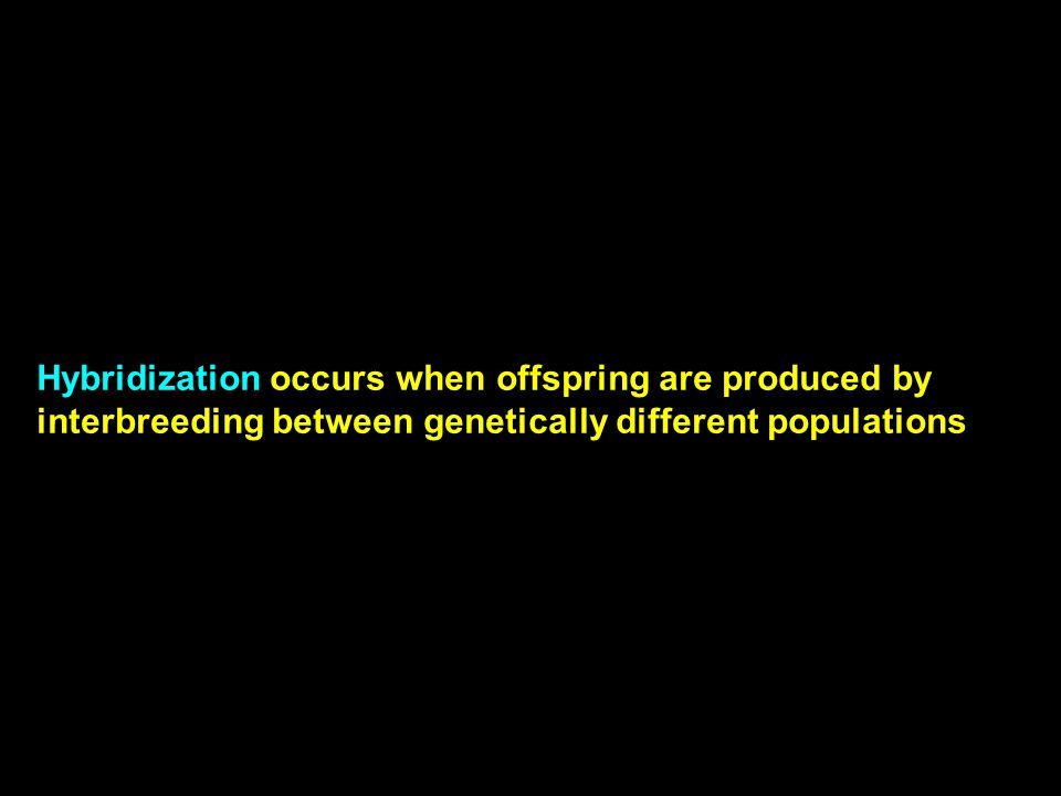 Hybridization occurs when offspring are produced by interbreeding between genetically different populations