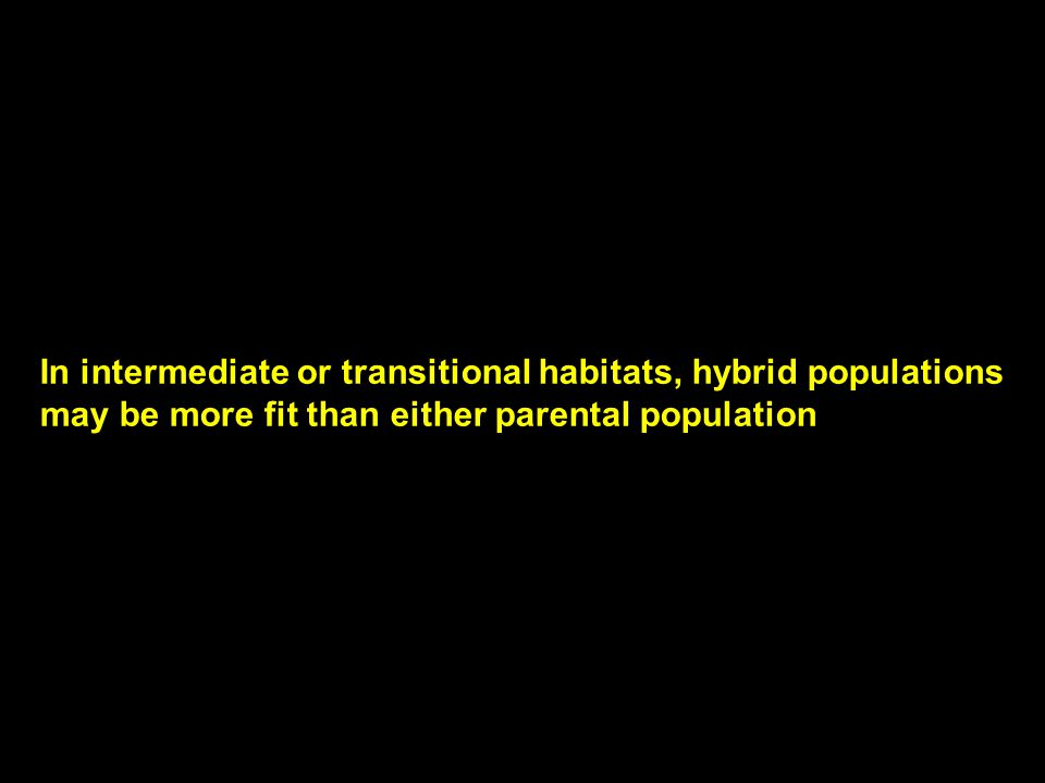 In intermediate or transitional habitats, hybrid populations may be more fit than either parental population