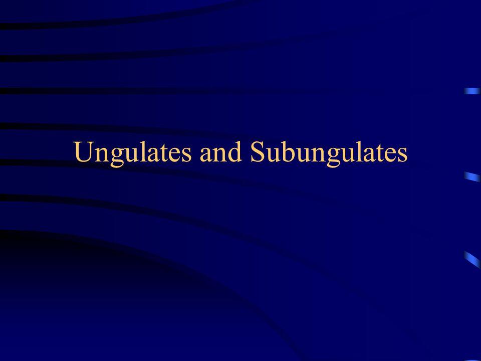 Ungulates and Subungulates