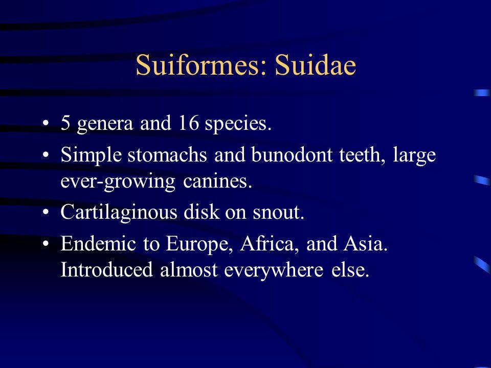 Suiformes: Suidae 5 genera and 16 species.