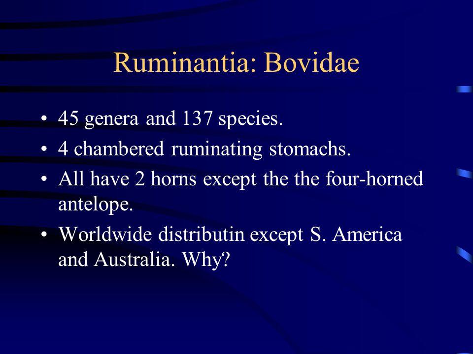 Ruminantia: Bovidae 45 genera and 137 species. 4 chambered ruminating stomachs.