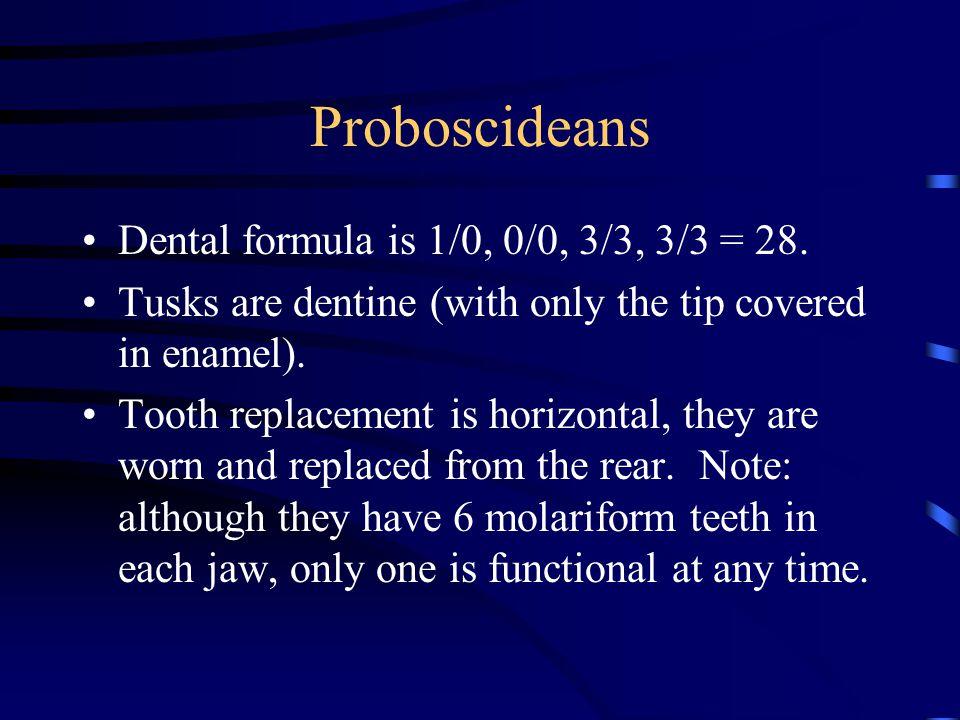 Proboscideans Dental formula is 1/0, 0/0, 3/3, 3/3 = 28.