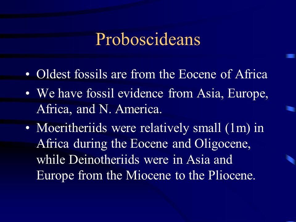 Proboscideans Oldest fossils are from the Eocene of Africa We have fossil evidence from Asia, Europe, Africa, and N.