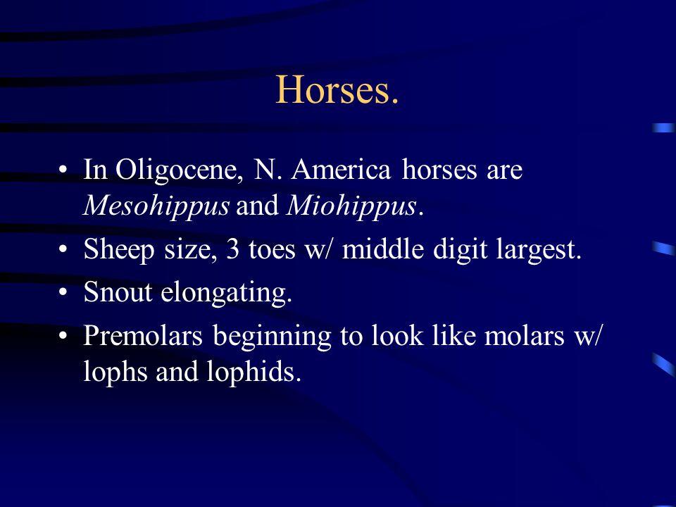 Horses. In Oligocene, N. America horses are Mesohippus and Miohippus.